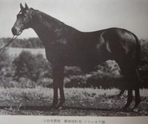 繁殖種牡馬シアンモア号