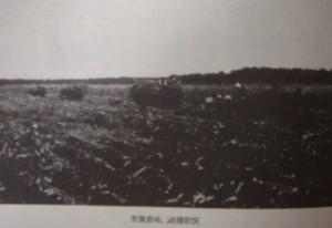 末広農場収穫状況