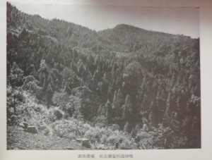 図南産業松及広葉杉造林地