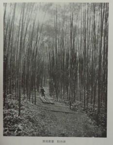 図南産業柱竹林
