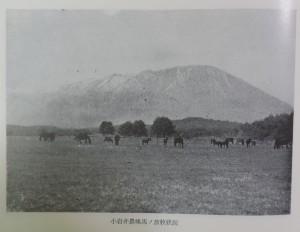 小岩井農場馬の放牧状況